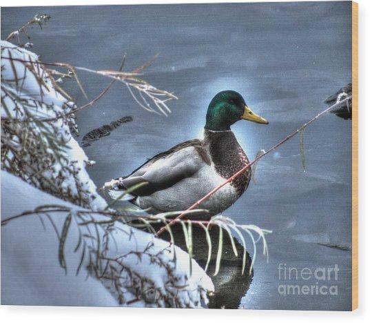 Mallard In Winter Wood Print