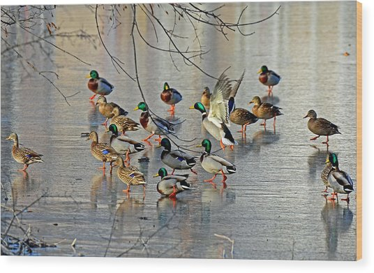 Mallards On A Frozen River Wood Print