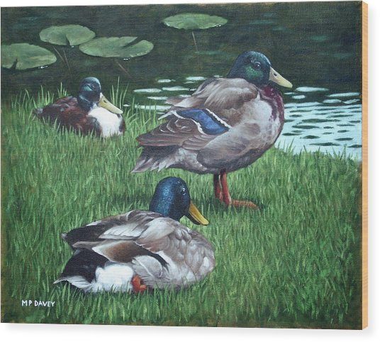 Mallards On River Bank Wood Print