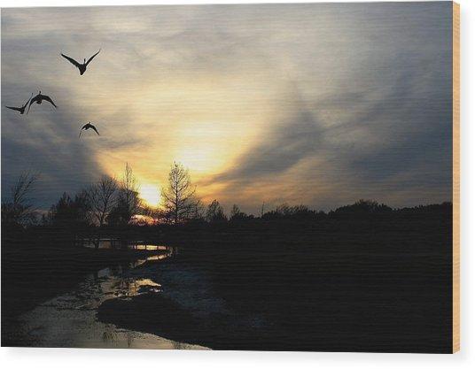 Mallards Silhouette At Sunset Wood Print