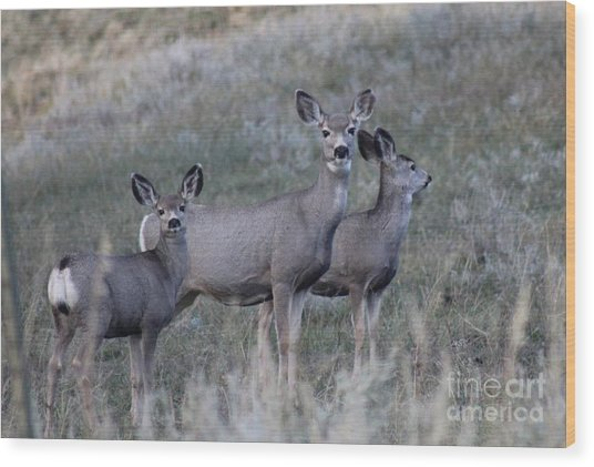 Mama And Babies Wood Print by Brenda Henley