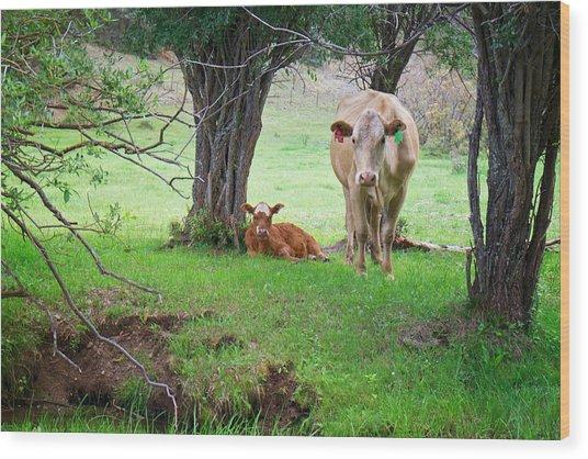Mama Cow And Calf Wood Print