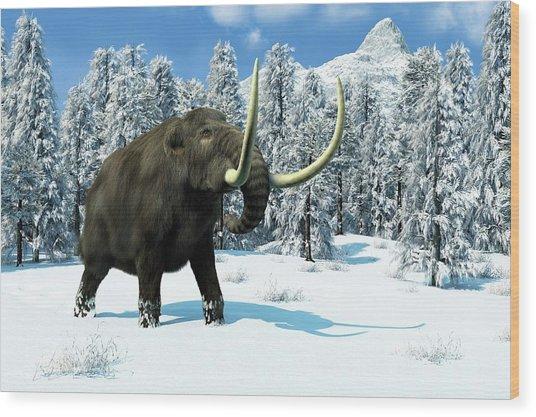 Mammoth Wood Print by Roger Harris