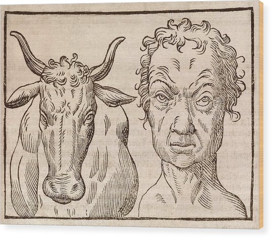 Man And Bull's Head Wood Print