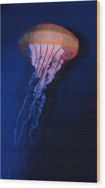 Man Of War Jellyfish Wood Print