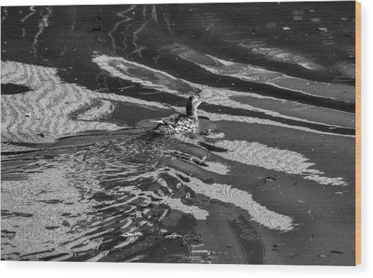 Mandarin Duck Bw - Leif Sohlman Wood Print