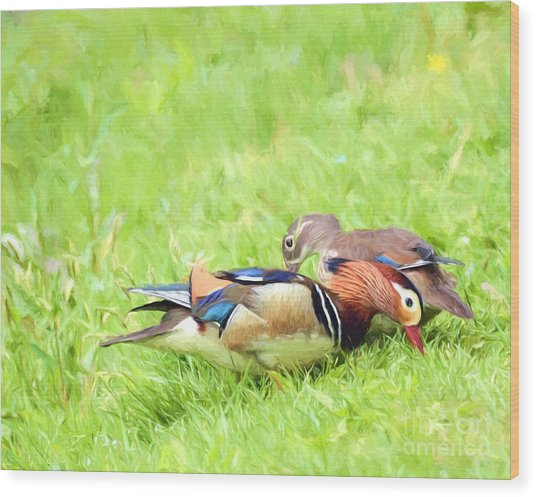Mandarin Duck Couple Wood Print