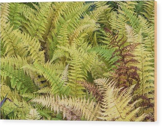 Mane Fern Wood Print