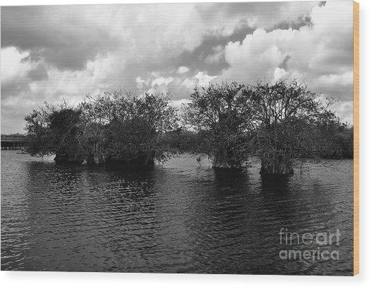 Mangrove Islands Wood Print by Andres LaBrada