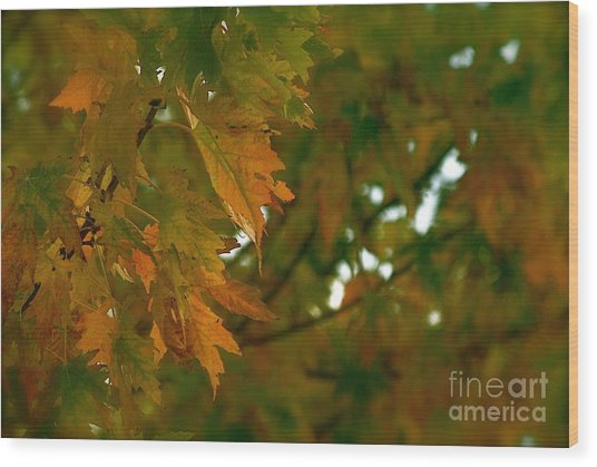 Manhattan Fall Wood Print by Photography by Tiwago