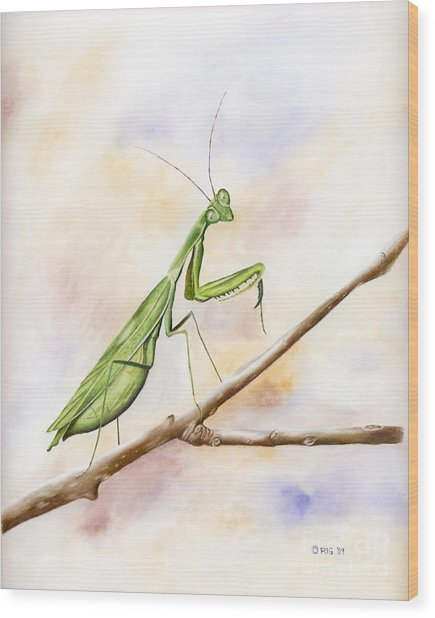 Mantis Wood Print