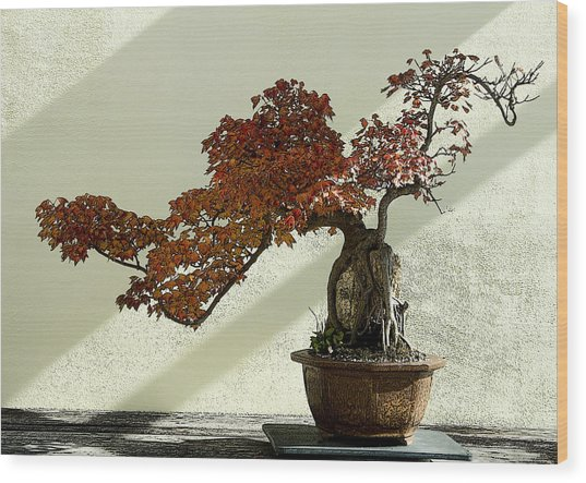 Maple Bonsai Wood Print