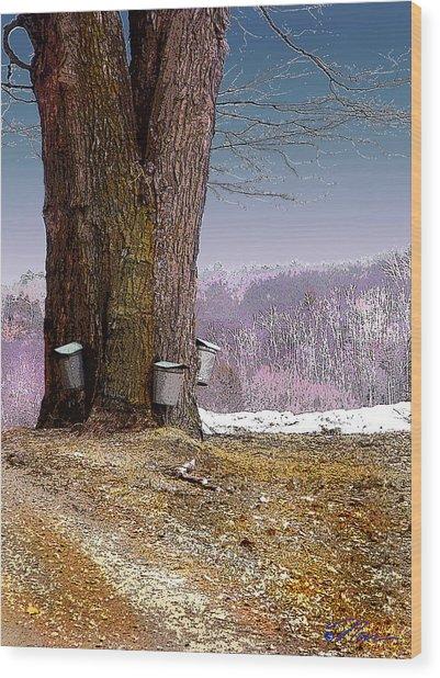 Maple Buckets Wood Print