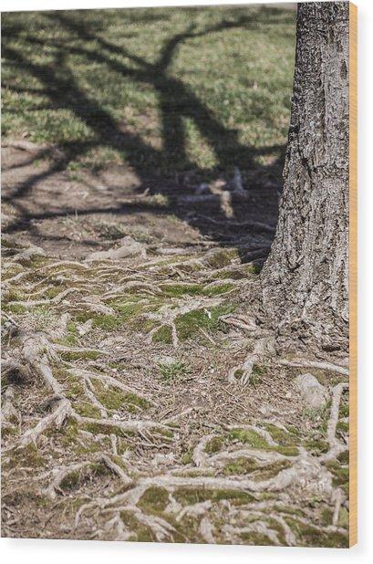 Maple Wood Print by Carl Engman