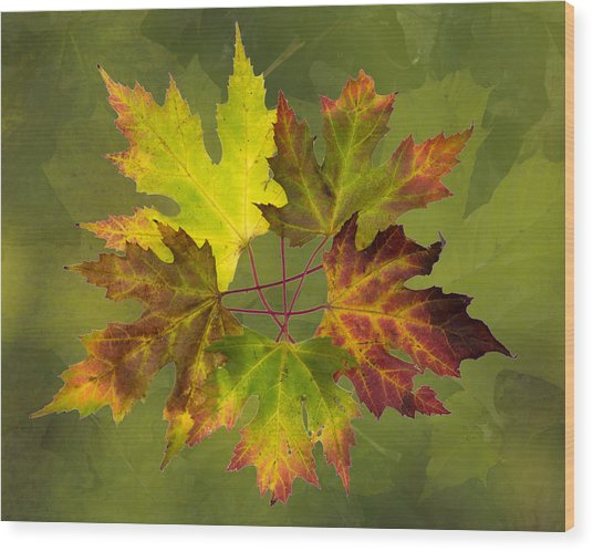 Maple Leaf Arrangement Wood Print
