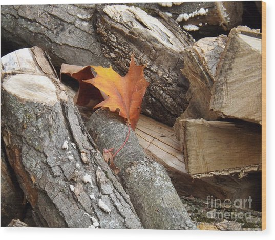 Maple Leaf In Wood Pile Wood Print