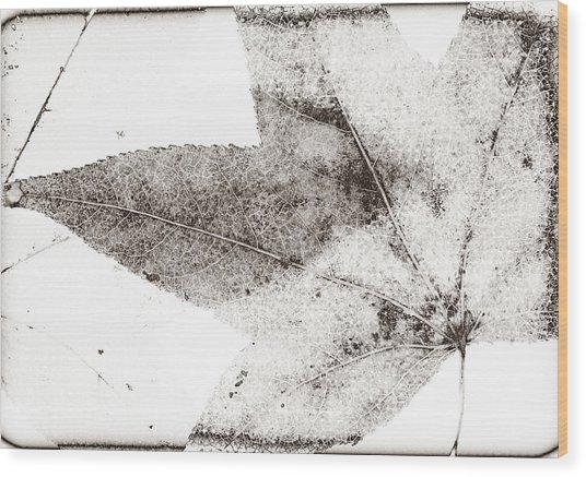 Maple Leaf Nature 1 Macro  Image Art Wood Print