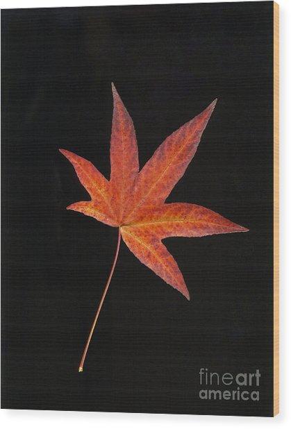 Maple Leaf On Black 2 Wood Print