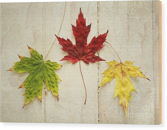 Maple Leave Wood Print by Isabel Poulin