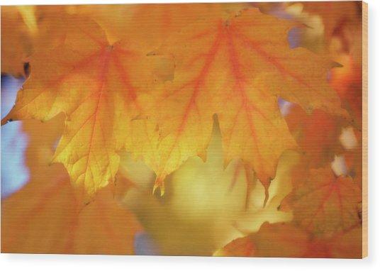 Maple Leaves (acer Saccharum) Wood Print