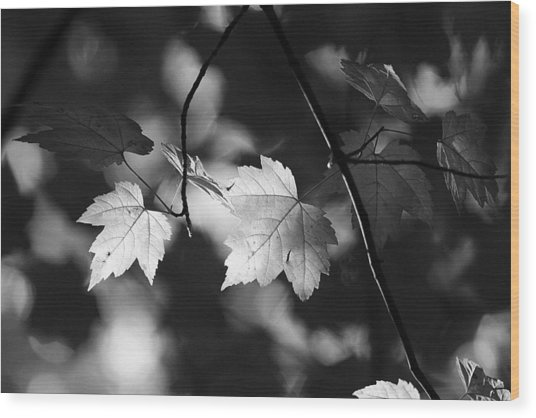 Maple Leaves In Black And White Wood Print