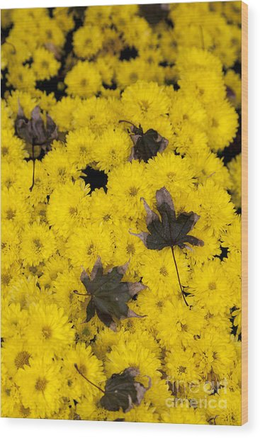 Maple Leaves On Chrysanthemum Wood Print