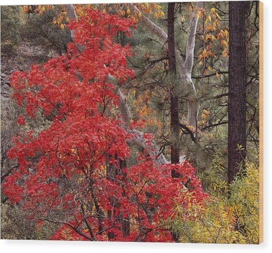 Maple Sycamore Pine-h Wood Print