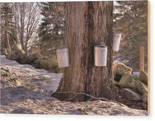 Maple Syrup Buckets Wood Print