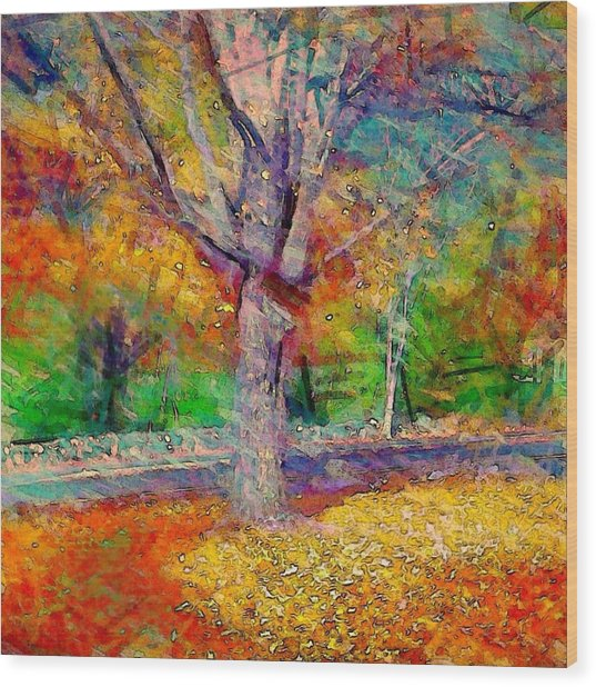 Maple Tree In Autumn - Square Wood Print