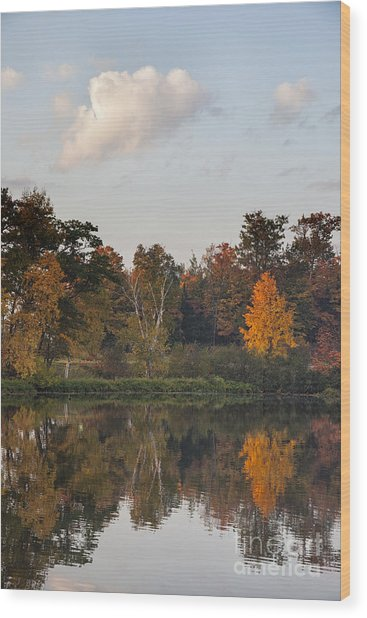 Maple Tree Reflection Wood Print