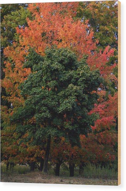 Maple Tree Variations Wood Print by Michel Mata