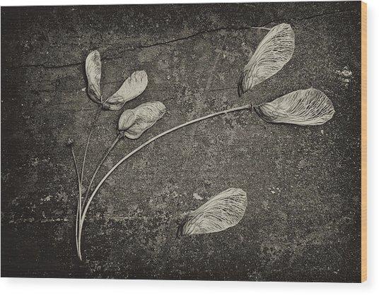 Maple Tree Whirlybirds Wood Print