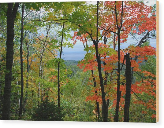 Maples Against Lake Superior - Tettegouche State Park Wood Print