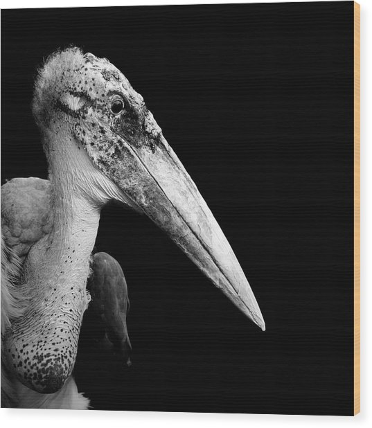 Portrait Of Marabou Stork In Black And White Wood Print