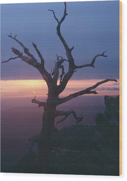 Marble View Snag-v Wood Print