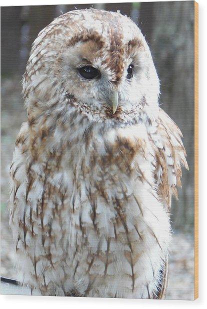 Marbled Owl Wood Print
