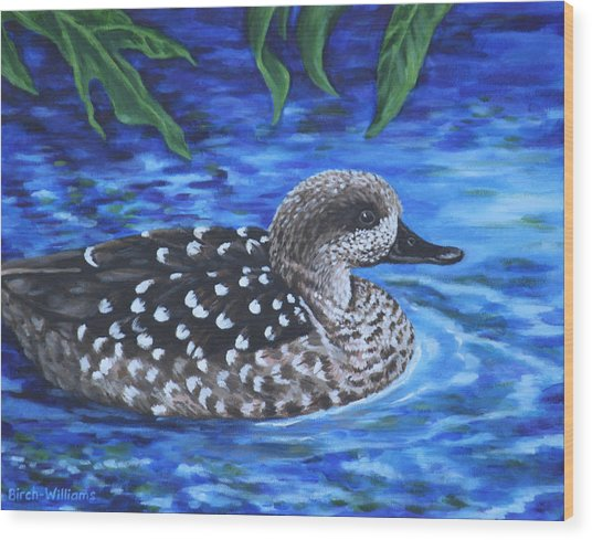 Marbled Teal Duck On The Water Wood Print
