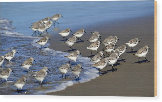 March Of The Sandpipers Wood Print
