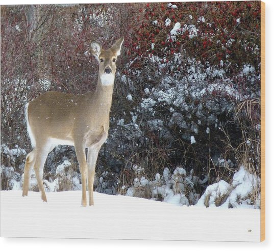 March Snow And A Doe Wood Print