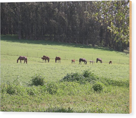 Mares And Foals Wood Print