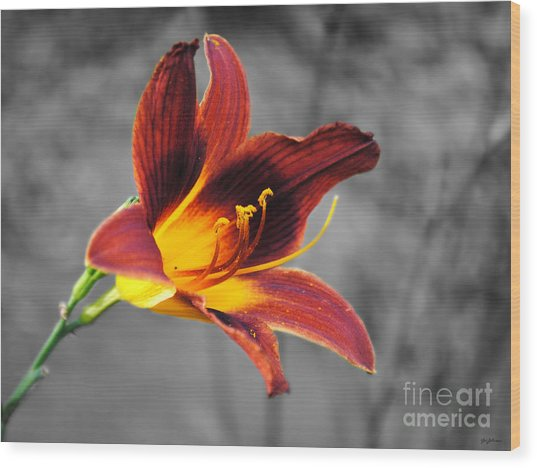 Margo's Lily Wood Print