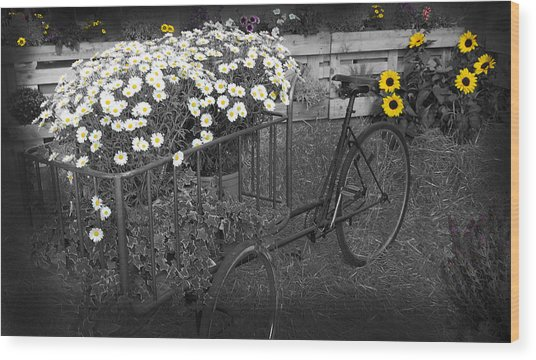 Marguerites And Bicycle Wood Print