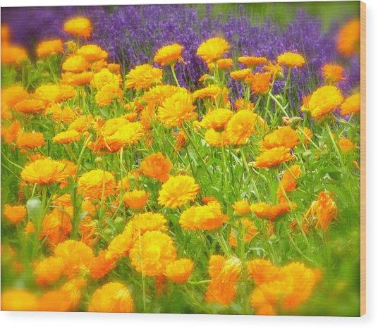 Marigolds And Lavender Wood Print