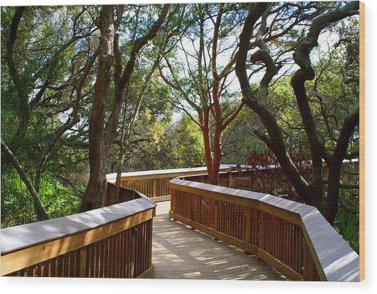 Maritime Forest Boardwalk Wood Print
