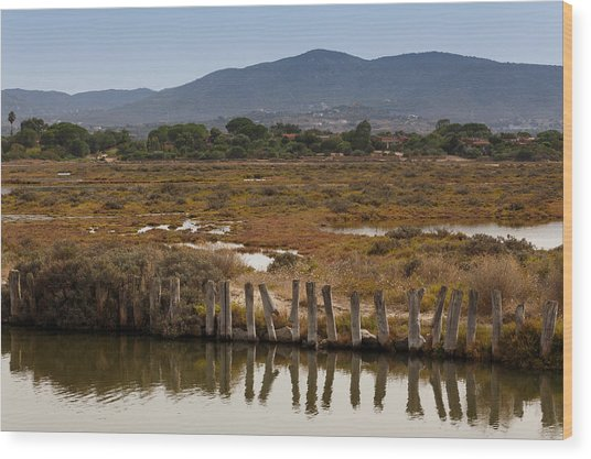 Marsh Wood Print by Paul Indigo