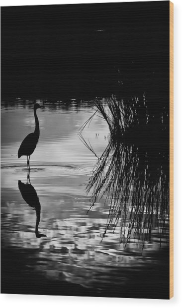 Marsh Reflection Wood Print