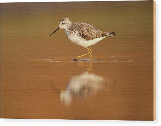 Marsh Sandpiper (tringa Stagnatilis) Wood Print by Photostock-israel