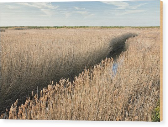 Marshland, Uk Wood Print by Science Photo Library
