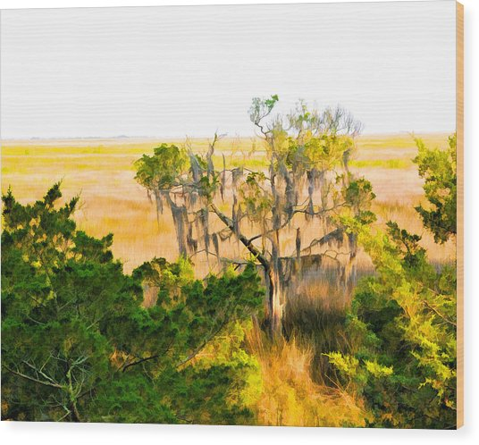 Marsh Cedar Tree And Moss Wood Print