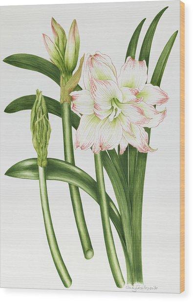Mary Lou Amaryllis Wood Print
